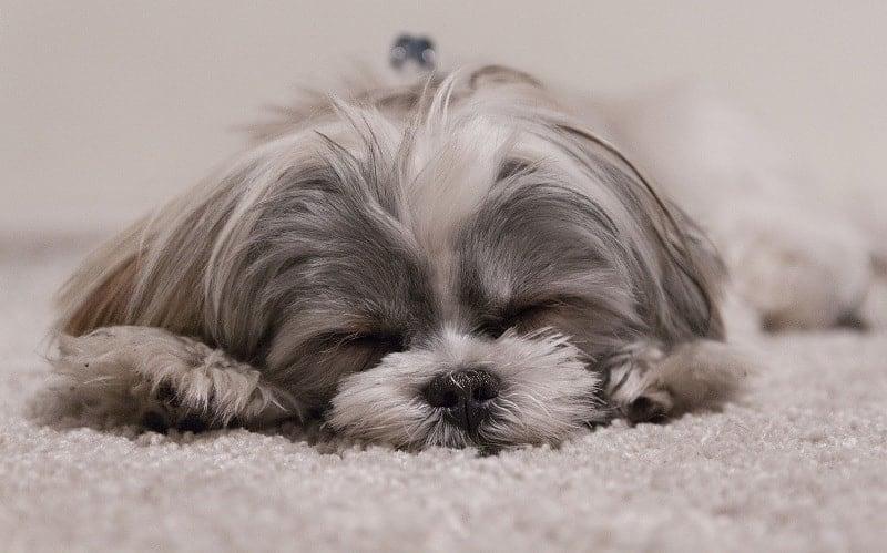 Huisdieren fotografie - hond